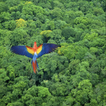 The Survival of the Rainforest