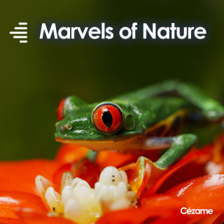 Marvels of Nature