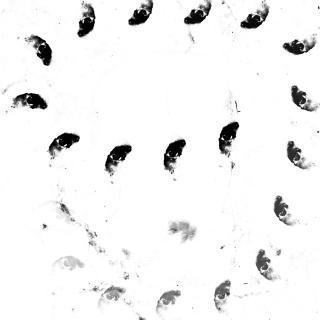 Monolithe Noir - Moira Lp
